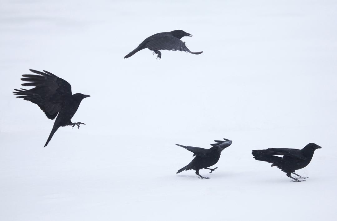 Feather Quartet