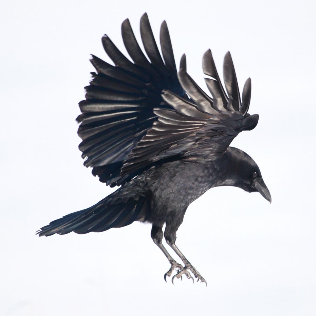Sensation-ailes